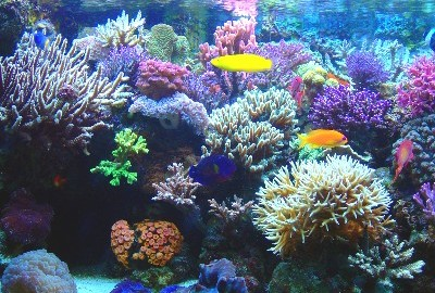 2018 Flower Gardens Trips Gigglin 39 Marlin Dive And Swim Scuba Diving Swim Lessons