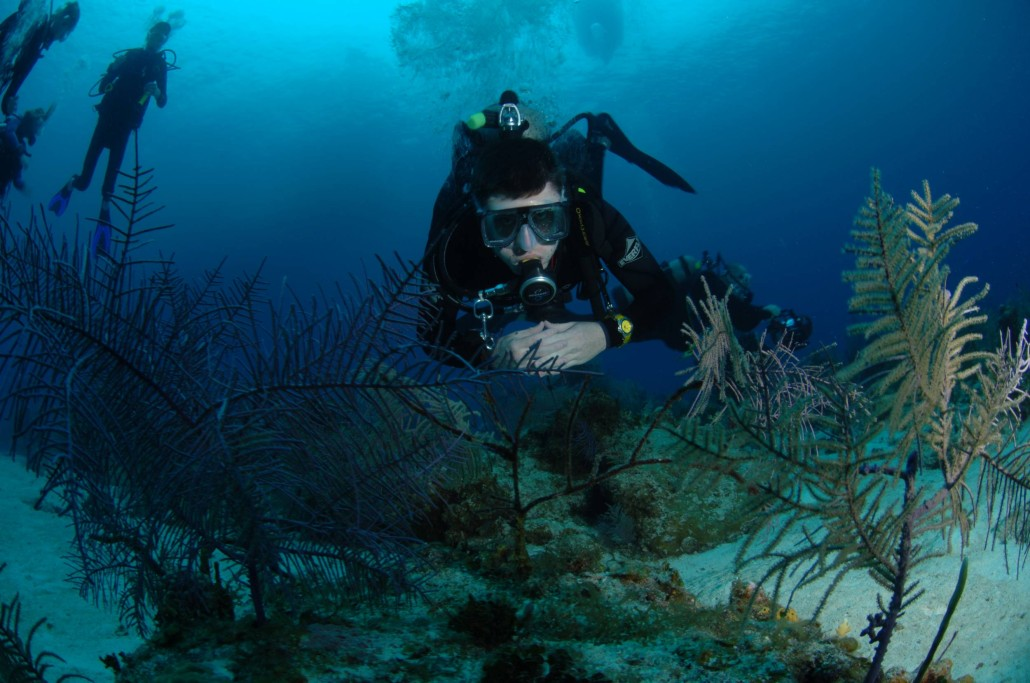 Resources Gigglin Marlin Dive And Swim Scuba Diving Swim Lessons